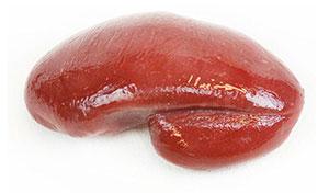 Spleen Image